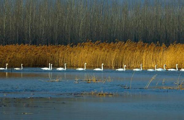 黄河湿地保护区.jpg